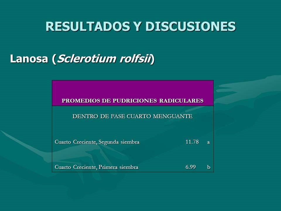 RESULTADOS Y DISCUSIONES Lanosa (Sclerotium rolfsii) PROMEDIOS DE PUDRICIONES RADICULARES DENTRO DE FASE CUARTO MENGUANTE Cuarto Creciente, Segunda si