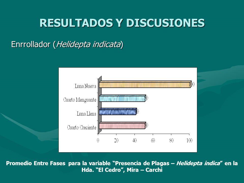 RESULTADOS Y DISCUSIONES Enrrollador (Helidepta indicata) Promedio Entre Fases para la variable Presencia de Plagas – Helidepta indica en la Hda. El C