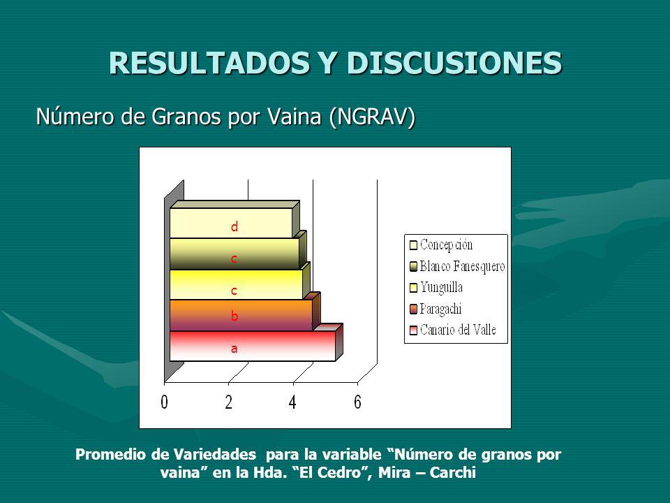 RESULTADOS Y DISCUSIONES Número de Granos por Vaina (NGRAV) a b c c d Promedio de Variedades para la variable Número de granos por vaina en la Hda. El