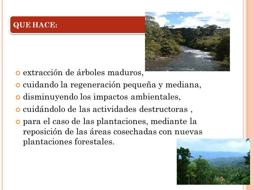 extracción de árboles maduros, cuidando la regeneración pequeña y mediana, disminuyendo los impactos ambientales, cuidándolo de las actividades destru
