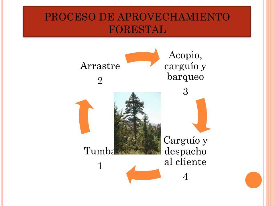 PROCESO DE APROVECHAMIENTO FORESTAL Acopio, carguío y barqueo 3 Carguío y despacho al cliente 4 Tumba 1 Arrastre 2