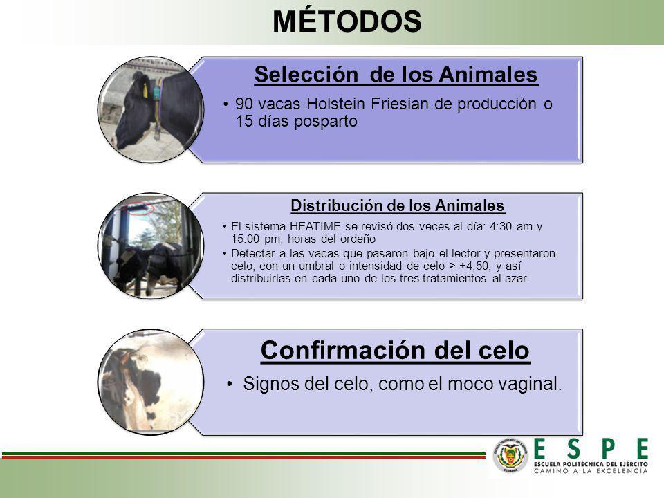 Selección de los Animales 90 vacas Holstein Friesian de producción o 15 días posparto Distribución de los Animales El sistema HEATIME se revisó dos ve