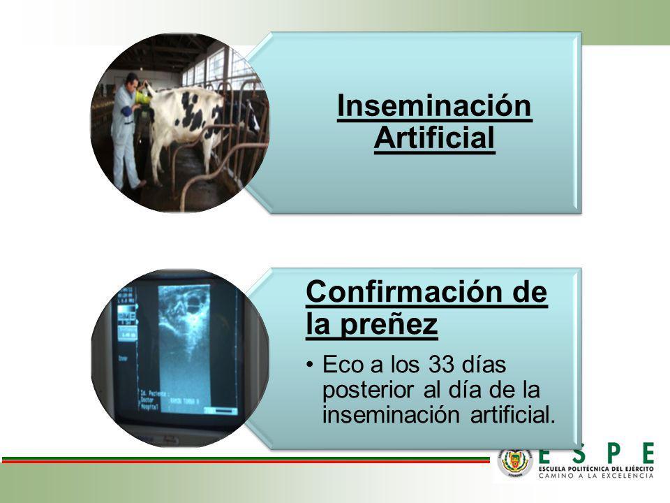 Inseminación Artificial Confirmación de la preñez Eco a los 33 días posterior al día de la inseminación artificial.