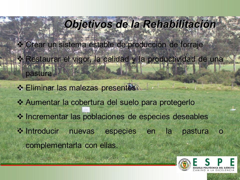 Objetivos de la Rehabilitación Crear un sistema estable de producción de forraje Restaurar el vigor, la calidad y la productividad de una pastura Elim
