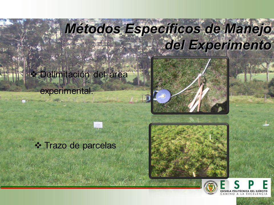 Delimitación del área experimental. Trazo de parcelas Métodos Específicos de Manejo del Experimento