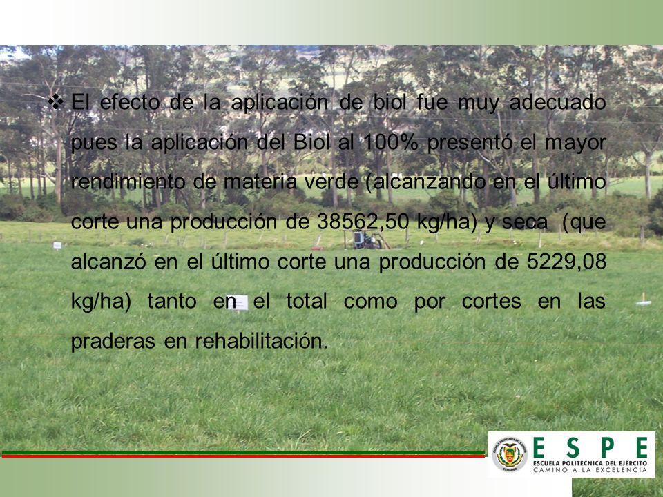 El efecto de la aplicación de biol fue muy adecuado pues la aplicación del Biol al 100% presentó el mayor rendimiento de materia verde (alcanzando en