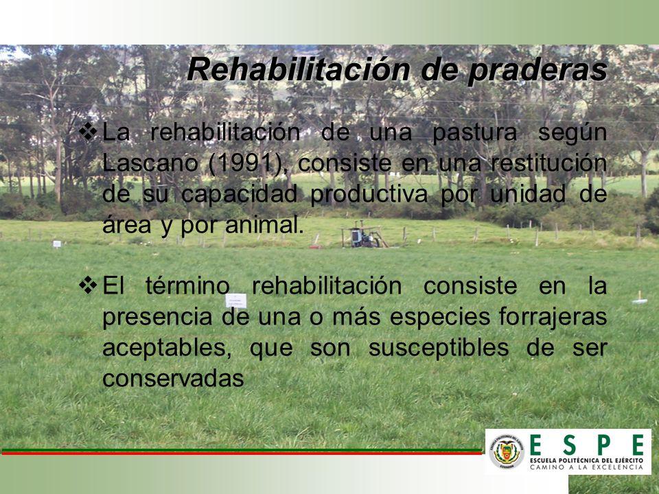 Rehabilitación de praderas La rehabilitación de una pastura según Lascano (1991), consiste en una restitución de su capacidad productiva por unidad de