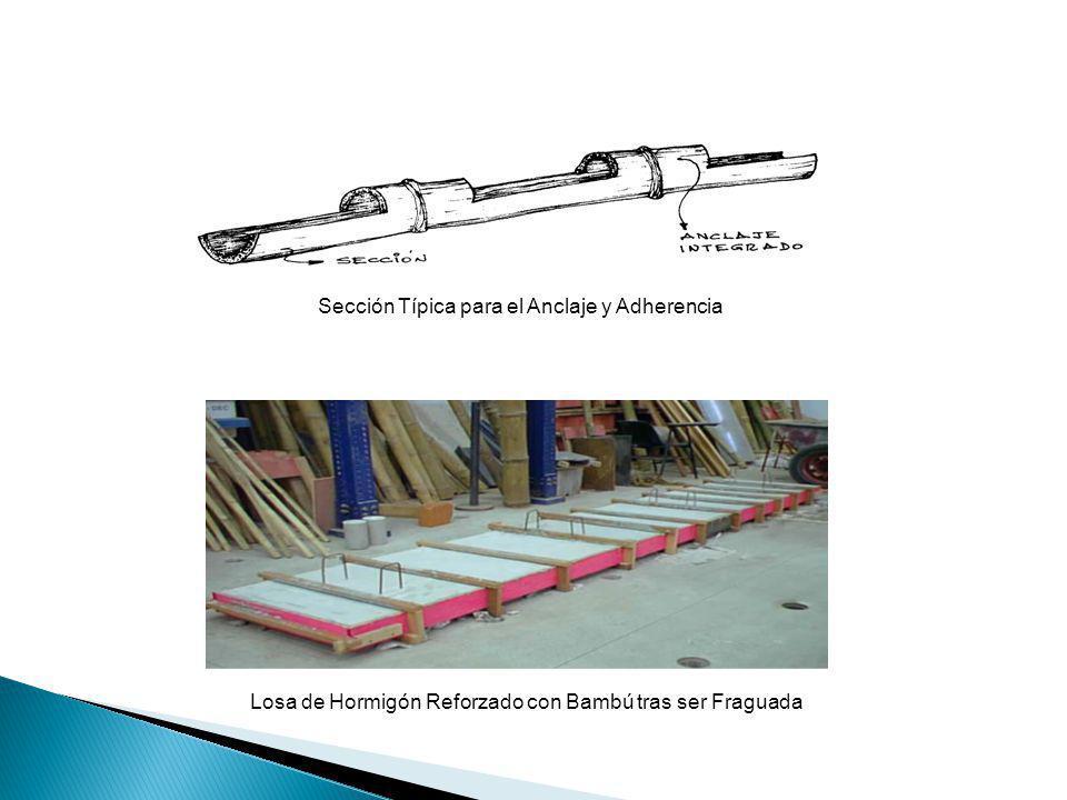 Losa de Hormigón Reforzado con Bambú tras ser Fraguada Sección Típica para el Anclaje y Adherencia