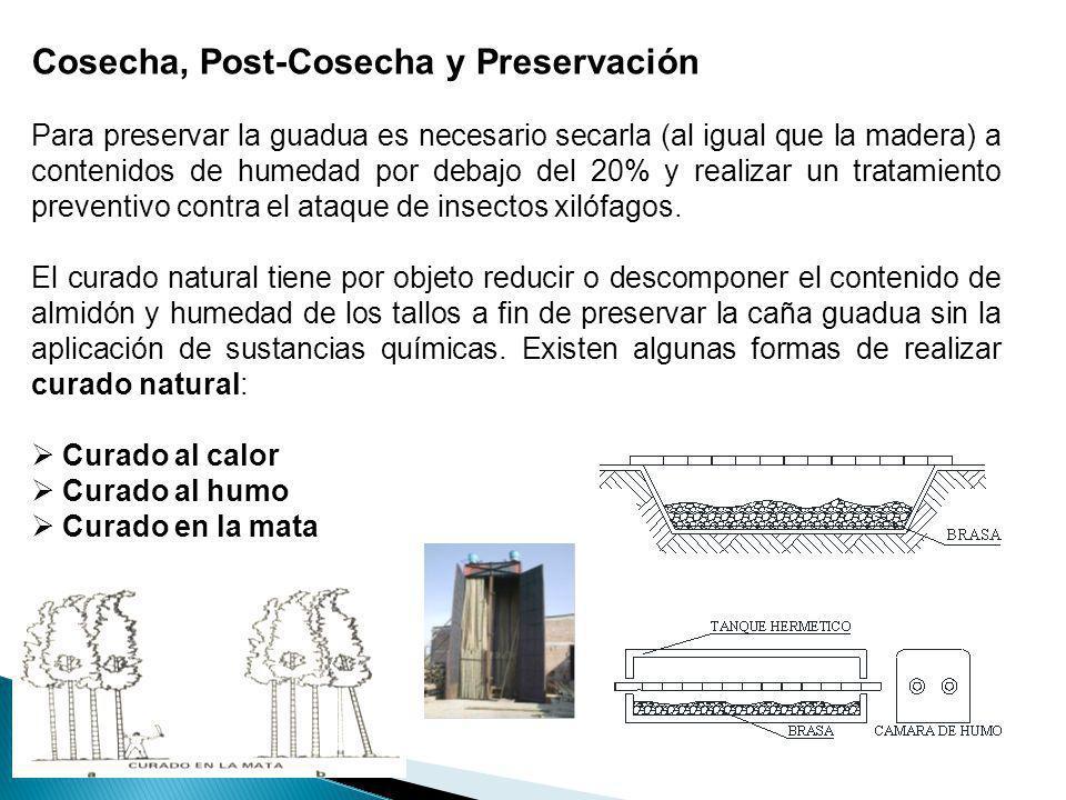 Cosecha, Post-Cosecha y Preservación Para preservar la guadua es necesario secarla (al igual que la madera) a contenidos de humedad por debajo del 20%