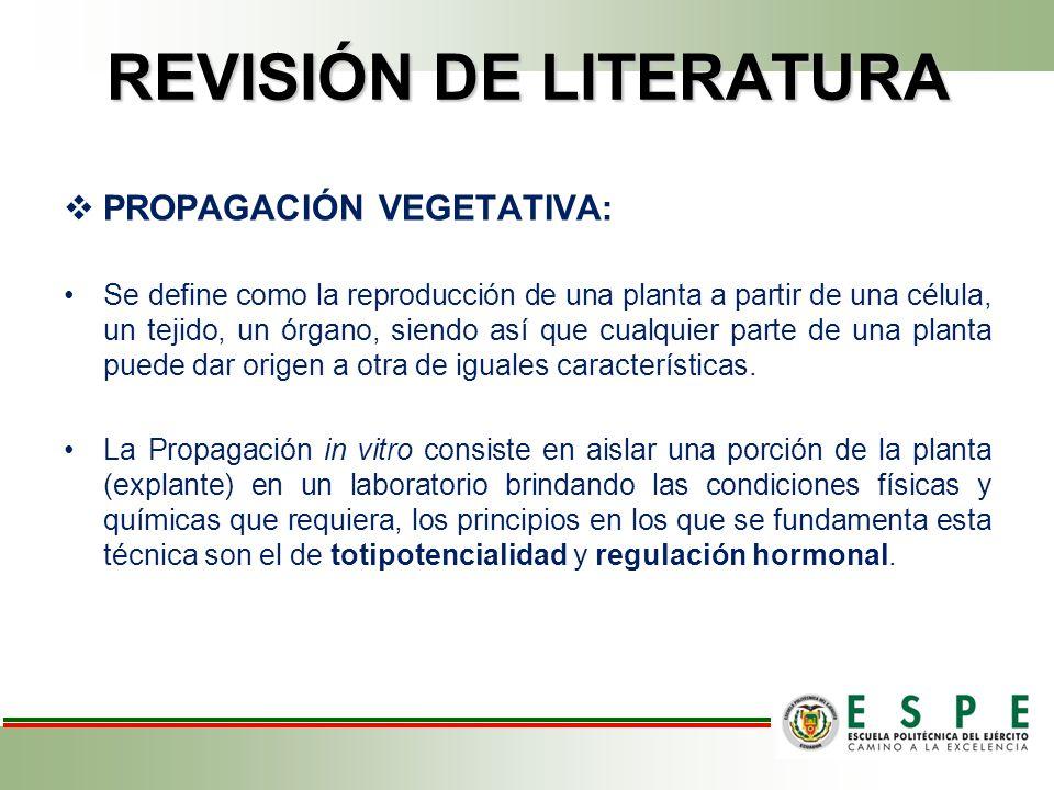 REVISIÓN DE LITERATURA PROPAGACIÓN VEGETATIVA: Se define como la reproducción de una planta a partir de una célula, un tejido, un órgano, siendo así que cualquier parte de una planta puede dar origen a otra de iguales características.