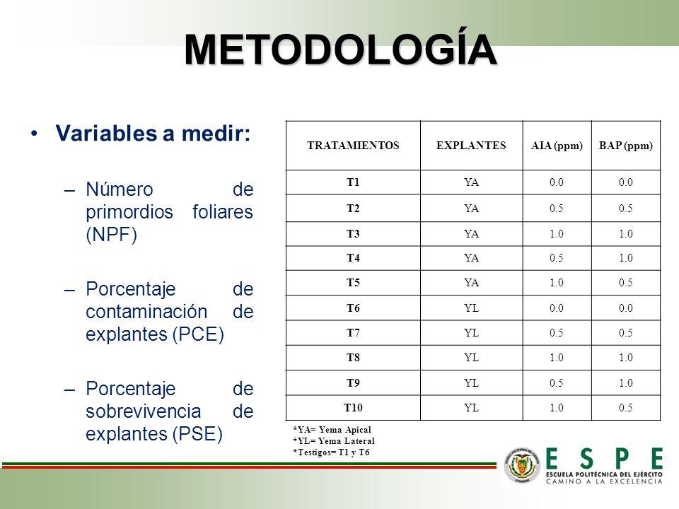 METODOLOGÍA Variables a medir: –Número de primordios foliares (NPF) –Porcentaje de contaminación de explantes (PCE) –Porcentaje de sobrevivencia de explantes (PSE) TRATAMIENTOSEXPLANTESAIA (ppm)BAP (ppm) T1YA0.0 T2YA0.5 T3YA1.0 T4YA0.51.0 T5YA1.00.5 T6YL0.0 T7YL0.5 T8YL1.0 T9YL0.51.0 T10YL1.00.5 *YA= Yema Apical *YL= Yema Lateral *Testigos= T1 y T6