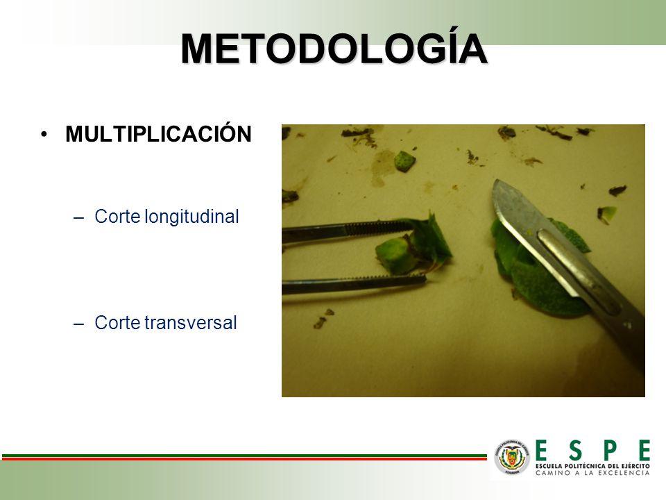 METODOLOGÍA MULTIPLICACIÓN –Corte longitudinal –Corte transversal