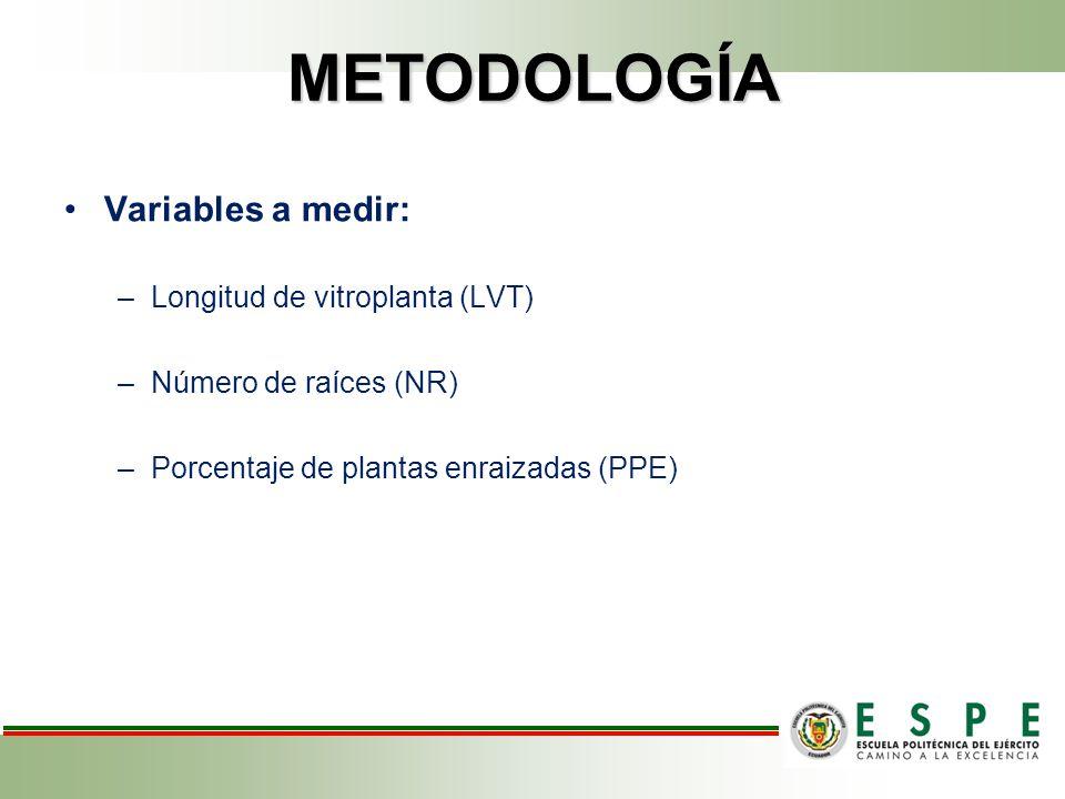 METODOLOGÍA Variables a medir: –Longitud de vitroplanta (LVT) –Número de raíces (NR) –Porcentaje de plantas enraizadas (PPE)