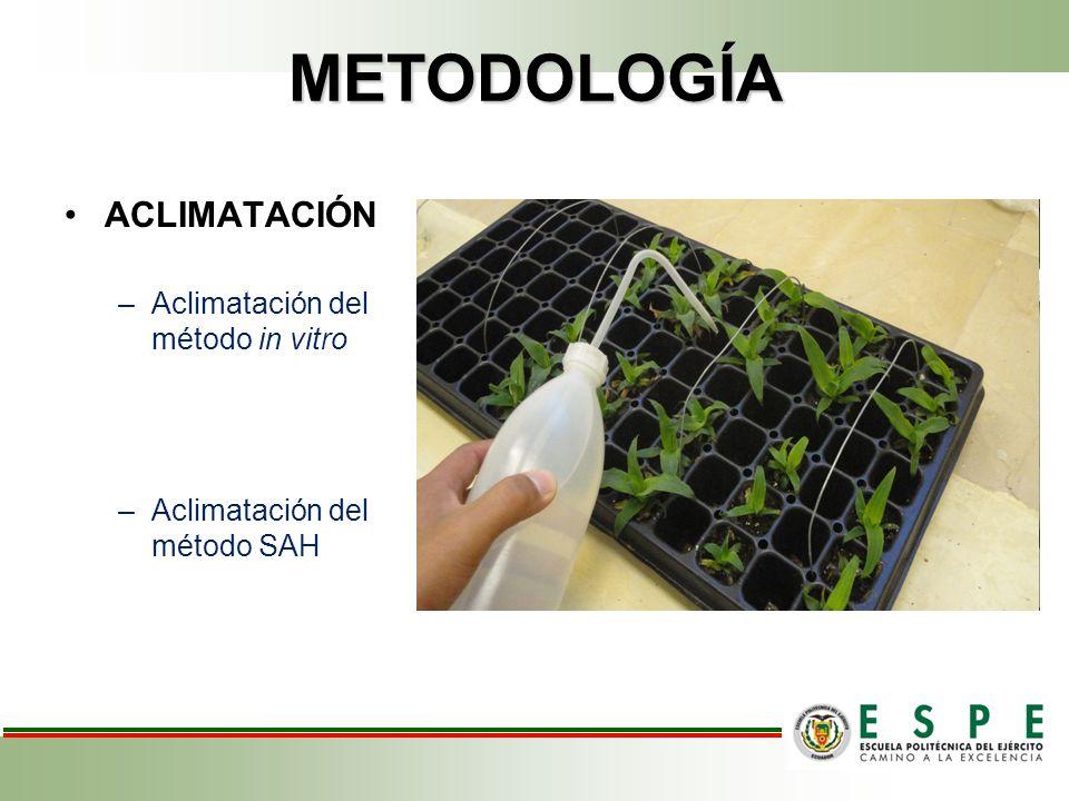 METODOLOGÍA ACLIMATACIÓN –Aclimatación del método in vitro –Aclimatación del método SAH