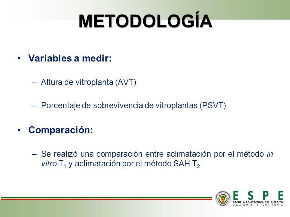 METODOLOGÍA Variables a medir: –Altura de vitroplanta (AVT) –Porcentaje de sobrevivencia de vitroplantas (PSVT) Comparación: –Se realizó una comparación entre aclimatación por el método in vitro T 1 y aclimatación por el método SAH T 2.
