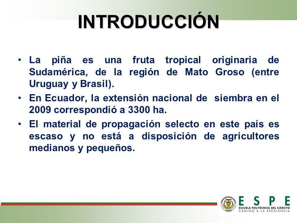 INTRODUCCIÓN La micropropagación como herramienta biotecnológica ha propiciado la producción masiva de plantas de diversas especies.