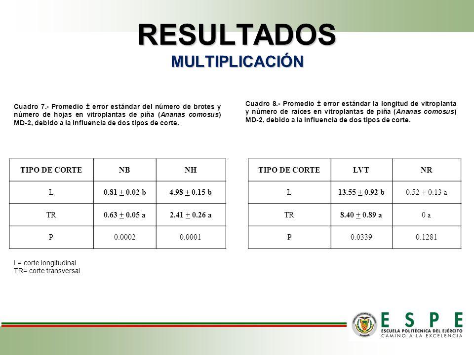 RESULTADOS MULTIPLICACIÓN Cuadro 7.- Promedio ± error estándar del número de brotes y número de hojas en vitroplantas de piña (Ananas comosus) MD-2, debido a la influencia de dos tipos de corte.