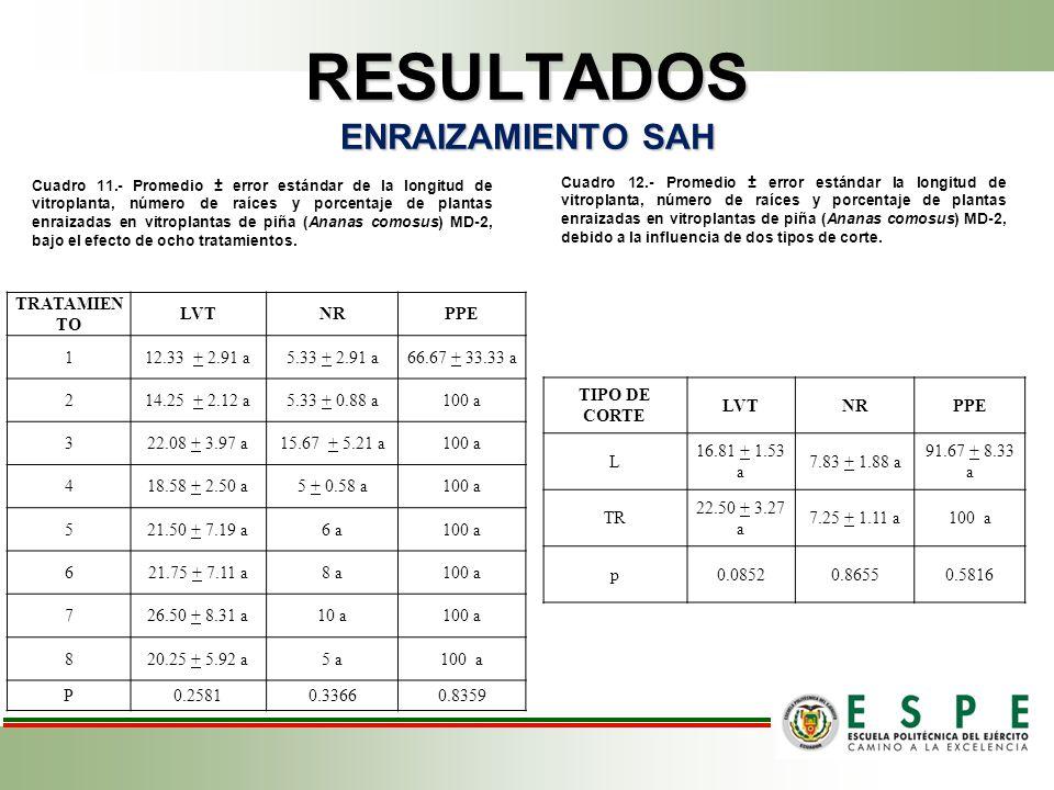 RESULTADOS ENRAIZAMIENTO SAH Cuadro 11.- Promedio ± error estándar de la longitud de vitroplanta, número de raíces y porcentaje de plantas enraizadas en vitroplantas de piña (Ananas comosus) MD-2, bajo el efecto de ocho tratamientos.
