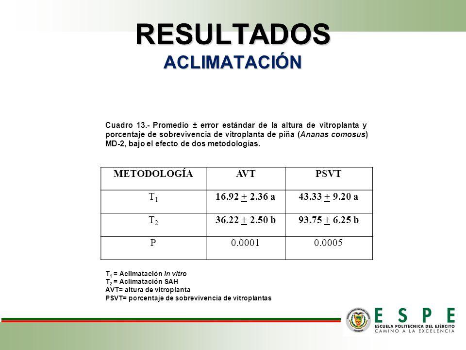 RESULTADOS ACLIMATACIÓN Cuadro 13.- Promedio ± error estándar de la altura de vitroplanta y porcentaje de sobrevivencia de vitroplanta de piña (Ananas comosus) MD-2, bajo el efecto de dos metodologías.