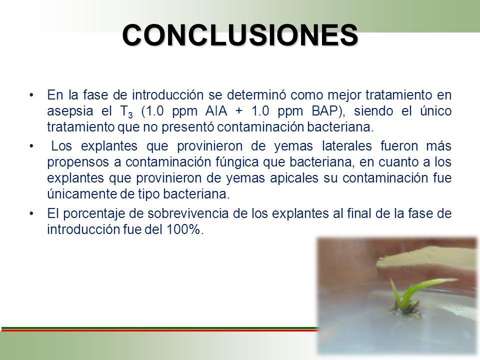 CONCLUSIONES En la fase de introducción se determinó como mejor tratamiento en asepsia el T 3 (1.0 ppm AIA + 1.0 ppm BAP), siendo el único tratamiento que no presentó contaminación bacteriana.