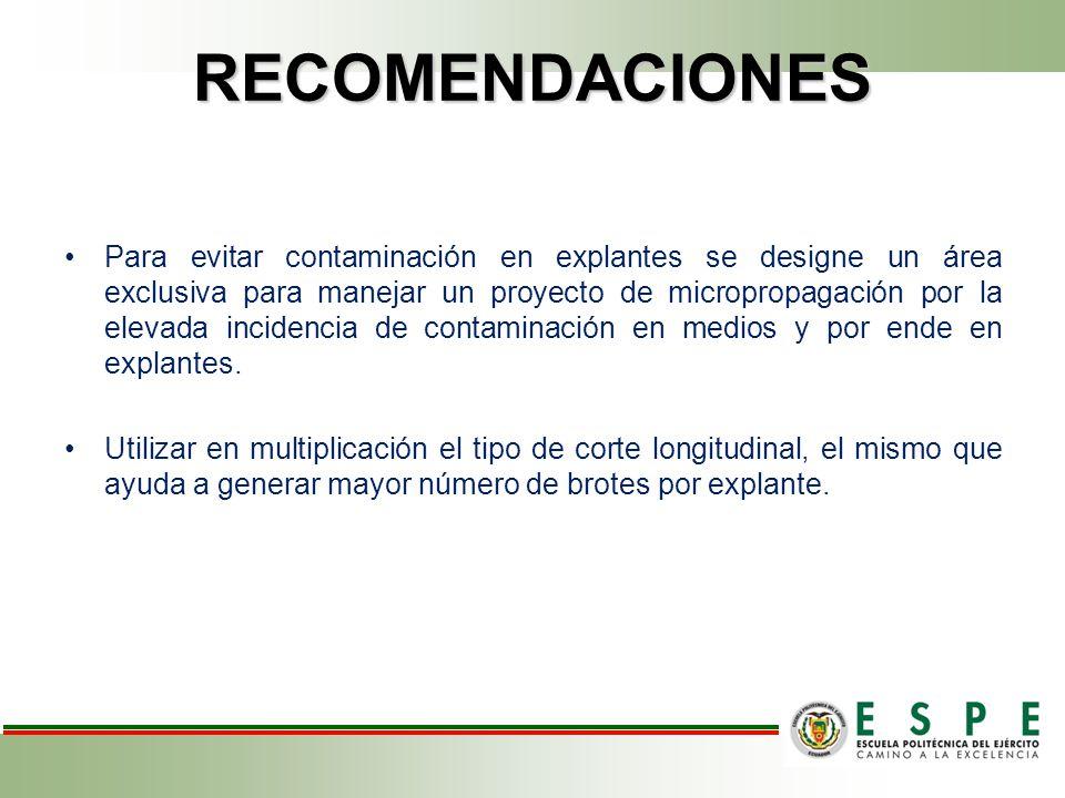 RECOMENDACIONES Para evitar contaminación en explantes se designe un área exclusiva para manejar un proyecto de micropropagación por la elevada incidencia de contaminación en medios y por ende en explantes.
