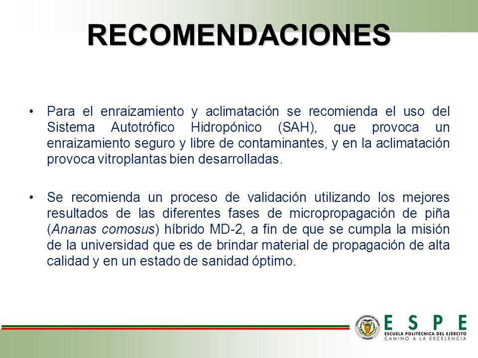 RECOMENDACIONES Para el enraizamiento y aclimatación se recomienda el uso del Sistema Autotrófico Hidropónico (SAH), que provoca un enraizamiento seguro y libre de contaminantes, y en la aclimatación provoca vitroplantas bien desarrolladas.