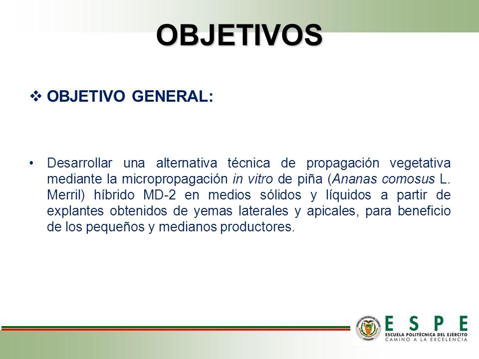 OBJETIVOS OBJETIVO GENERAL: Desarrollar una alternativa técnica de propagación vegetativa mediante la micropropagación in vitro de piña (Ananas comosus L.