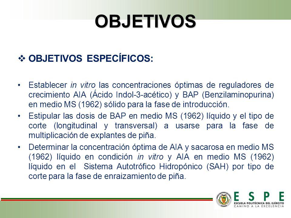 OBJETIVOS OBJETIVOS ESPECÍFICOS: Establecer in vitro las concentraciones óptimas de reguladores de crecimiento AIA (Ácido Indol-3-acético) y BAP (Benzilaminopurina) en medio MS (1962) sólido para la fase de introducción.