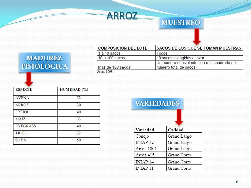 6 ARROZ MADUREZFISIOLÓGICAMADUREZFISIOLÓGICA VARIEDADESVARIEDADES MUESTREOMUESTREO