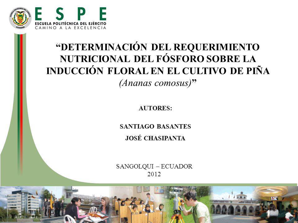 DETERMINACIÓN DEL REQUERIMIENTO NUTRICIONAL DEL FÓSFORO SOBRE LA INDUCCIÓN FLORAL EN EL CULTIVO DE PIÑA (Ananas comosus) SANGOLQUI – ECUADOR 2012