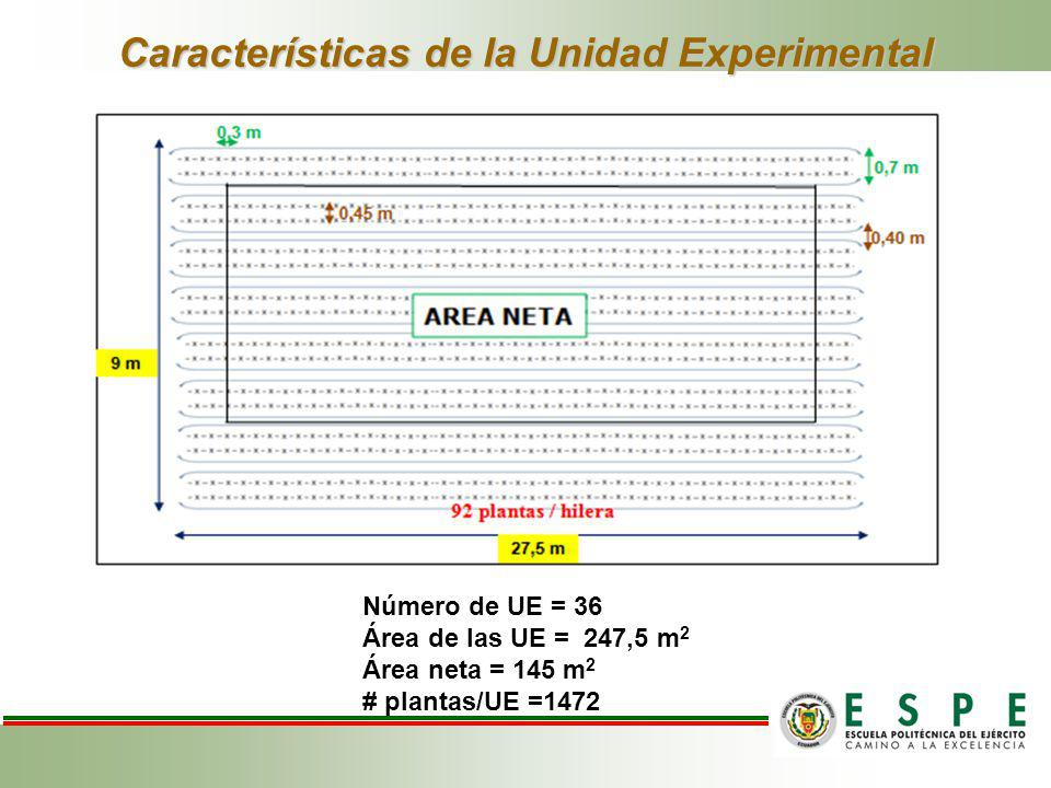 Características de la Unidad Experimental Número de UE = 36 Área de las UE = 247,5 m 2 Área neta = 145 m 2 # plantas/UE =1472