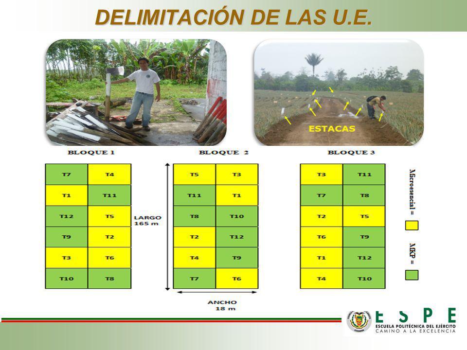 DELIMITACIÓN DE LAS U.E.