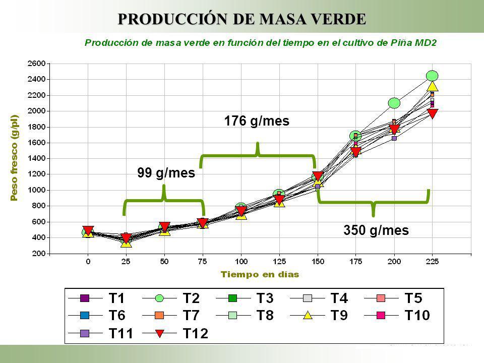 PRODUCCIÓN DE MASA VERDE 176 g/mes 350 g/mes 99 g/mes
