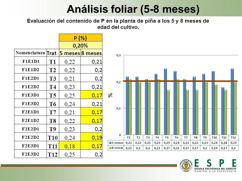 Análisis foliar (5-8 meses) P (%) 0,20% Nomenclatura Trat5 meses8 meses F1E1D1 T10,22 0,21 F1E1D2 T20,22 0,2 F1E2D1 T30,21 0,2 F1E2D2 T40,23 0,21 F1E3