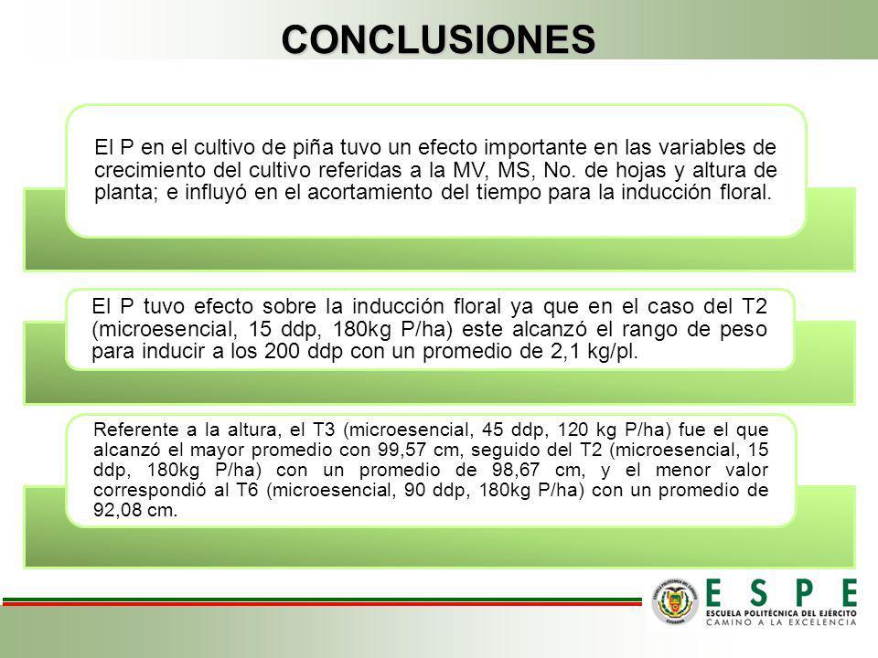 CONCLUSIONES El P en el cultivo de piña tuvo un efecto importante en las variables de crecimiento del cultivo referidas a la MV, MS, No. de hojas y al