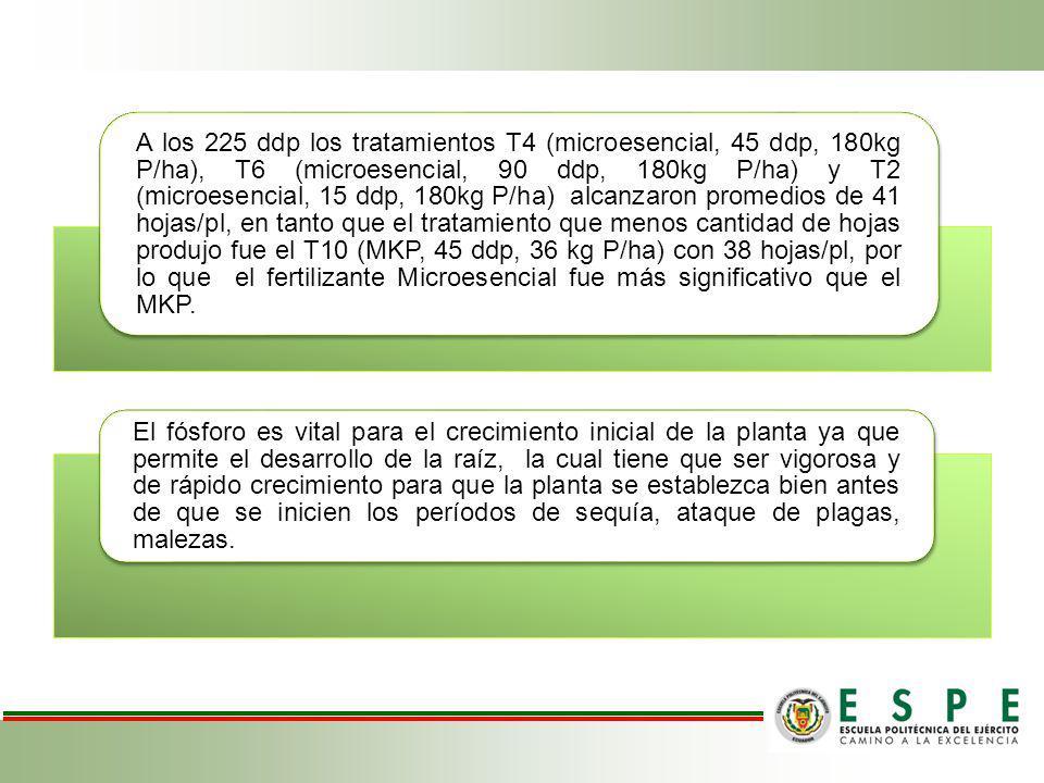 A los 225 ddp los tratamientos T4 (microesencial, 45 ddp, 180kg P/ha), T6 (microesencial, 90 ddp, 180kg P/ha) y T2 (microesencial, 15 ddp, 180kg P/ha)