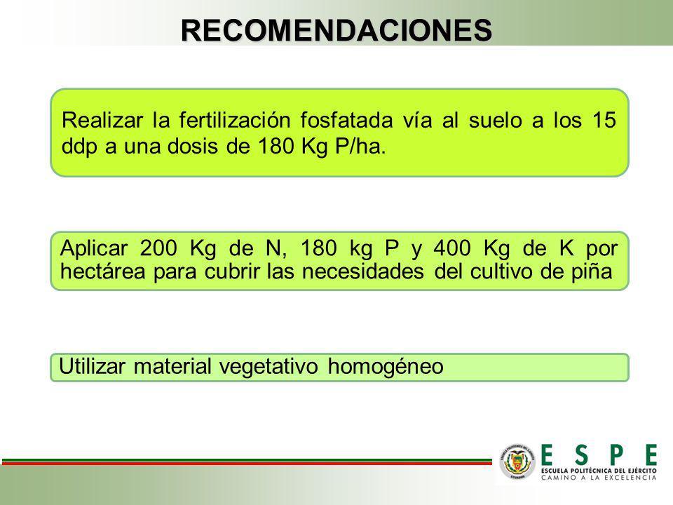 RECOMENDACIONES Realizar la fertilización fosfatada vía al suelo a los 15 ddp a una dosis de 180 Kg P/ha. Aplicar 200 Kg de N, 180 kg P y 400 Kg de K