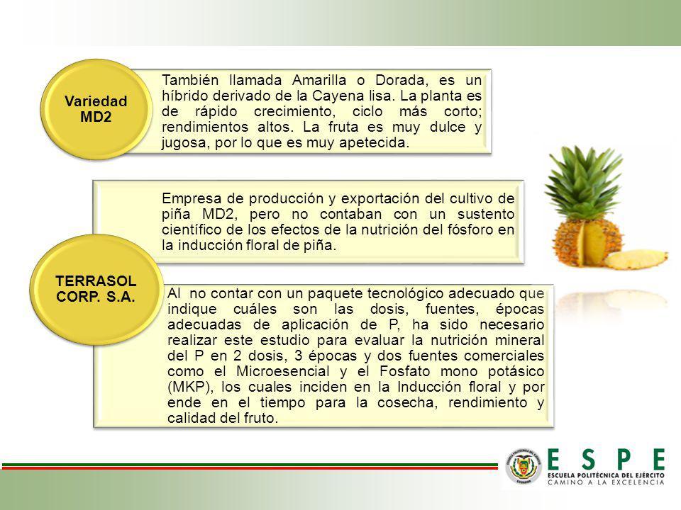 También llamada Amarilla o Dorada, es un híbrido derivado de la Cayena lisa. La planta es de rápido crecimiento, ciclo más corto; rendimientos altos.