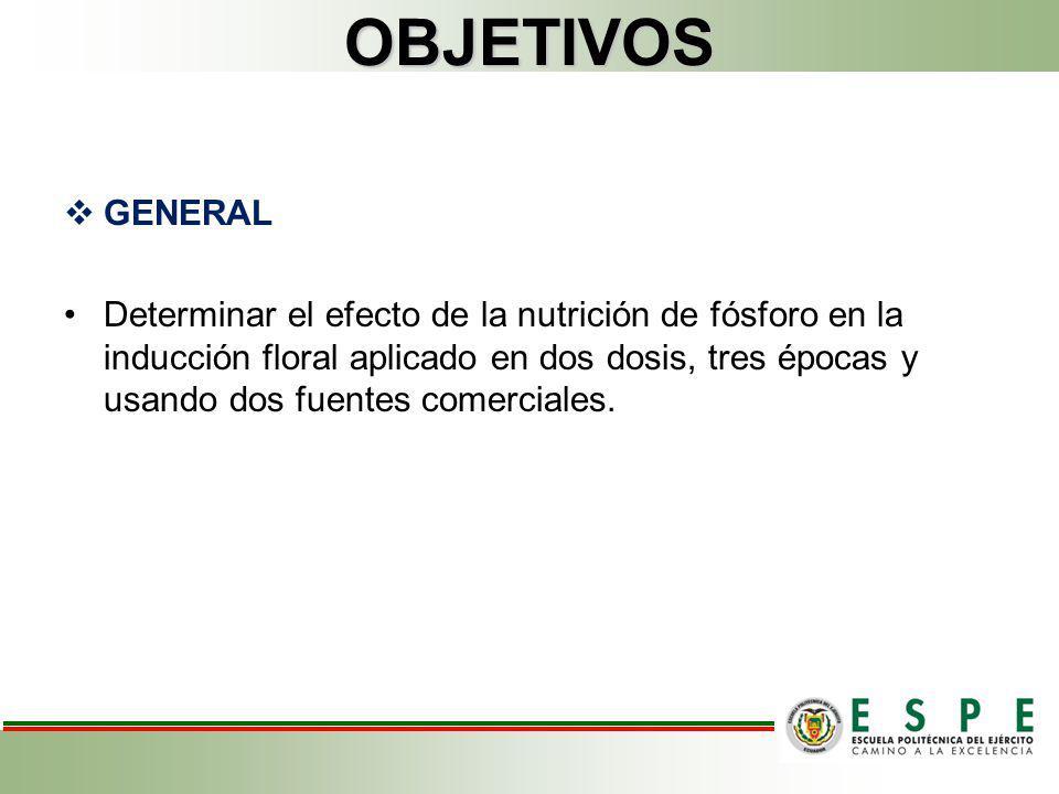 OBJETIVOS GENERAL Determinar el efecto de la nutrición de fósforo en la inducción floral aplicado en dos dosis, tres épocas y usando dos fuentes comer