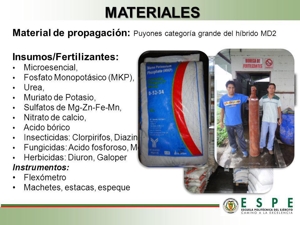 MATERIALES Material de propagación: Puyones categoría grande del híbrido MD2 Insumos/Fertilizantes: Microesencial, Fosfato Monopotásico (MKP), Urea, M