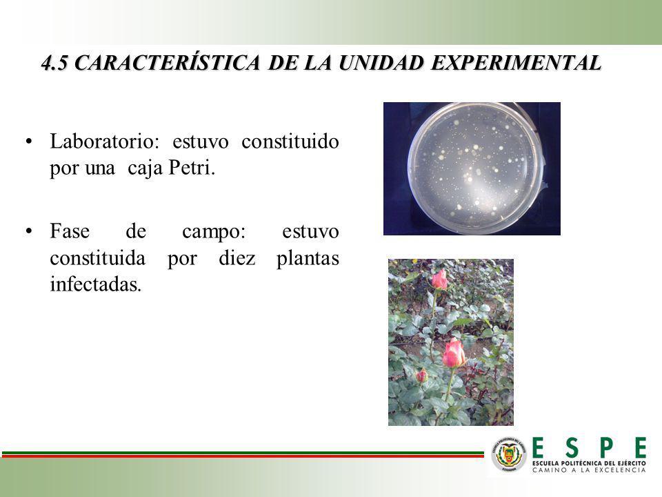 4.5 CARACTERÍSTICA DE LA UNIDAD EXPERIMENTAL Laboratorio: estuvo constituido por una caja Petri.