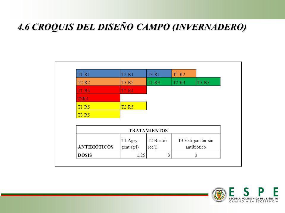 4.6 CROQUIS DEL DISEÑO CAMPO (INVERNADERO) T1 R1T2 R1T3 R1T1 R2 T2 R2T3 R2T1 R3T2 R3T3 R3 T1 R4T2 R4 T3R4 T1 R5T2 R5 T3 R5 TRATAMIENTOS ANTIBIÓTICOS T1:Agry- gent (g/l) T2:Bostok (cc/l) T3:Extirpación sin antibiótico DOSIS1,2530