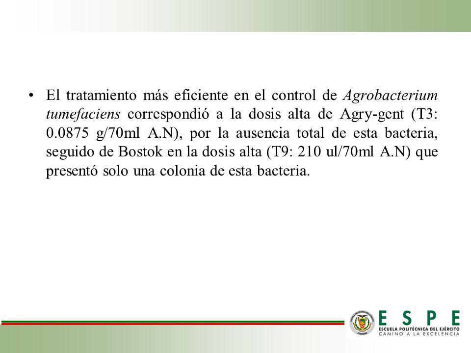 El tratamiento más eficiente en el control de Agrobacterium tumefaciens correspondió a la dosis alta de Agry-gent (T3: 0.0875 g/70ml A.N), por la ausencia total de esta bacteria, seguido de Bostok en la dosis alta (T9: 210 ul/70ml A.N) que presentó solo una colonia de esta bacteria.