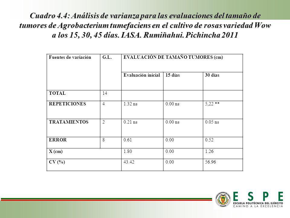 Cuadro 4.4: Análisis de varianza para las evaluaciones del tamaño de tumores de Agrobacterium tumefaciens en el cultivo de rosas variedad Wow a los 15, 30, 45 días.
