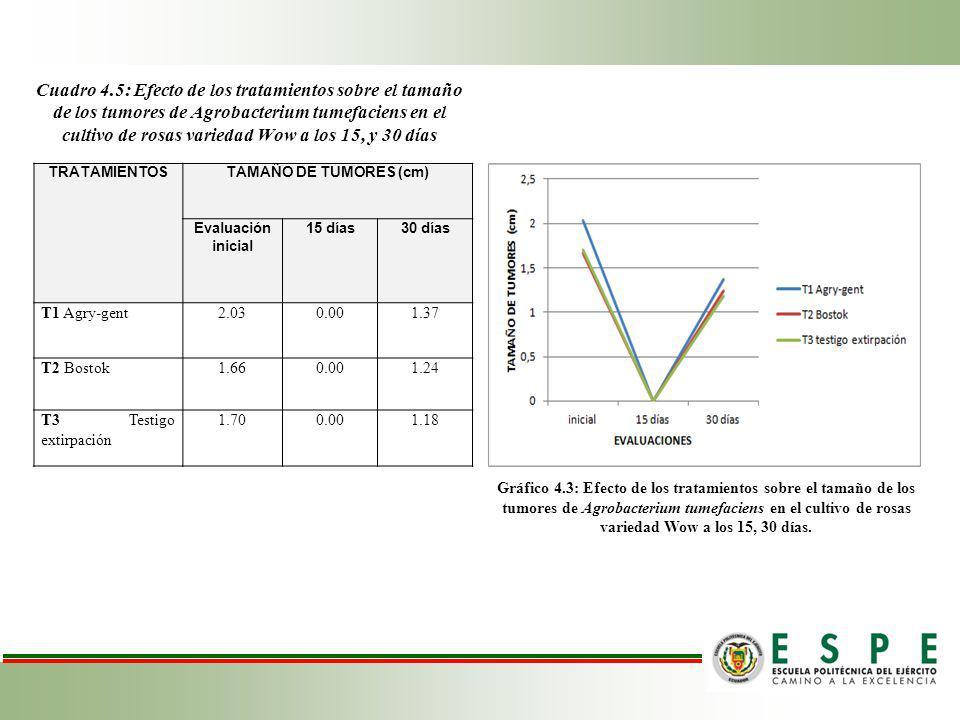 Cuadro 4.5: Efecto de los tratamientos sobre el tamaño de los tumores de Agrobacterium tumefaciens en el cultivo de rosas variedad Wow a los 15, y 30 días TRATAMIENTOSTAMAÑO DE TUMORES (cm) Evaluación inicial 15 días30 días T1 Agry-gent2.030.001.37 T2 Bostok1.660.001.24 T3 Testigo extirpación 1.700.001.18 Gráfico 4.3: Efecto de los tratamientos sobre el tamaño de los tumores de Agrobacterium tumefaciens en el cultivo de rosas variedad Wow a los 15, 30 días.