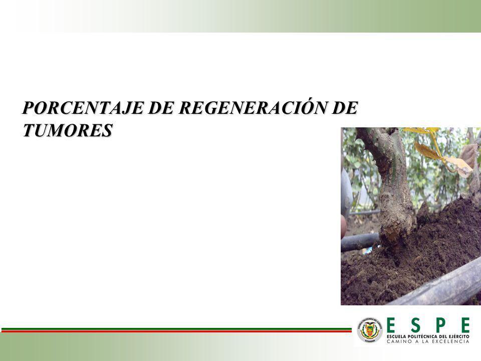 PORCENTAJE DE REGENERACIÓN DE TUMORES
