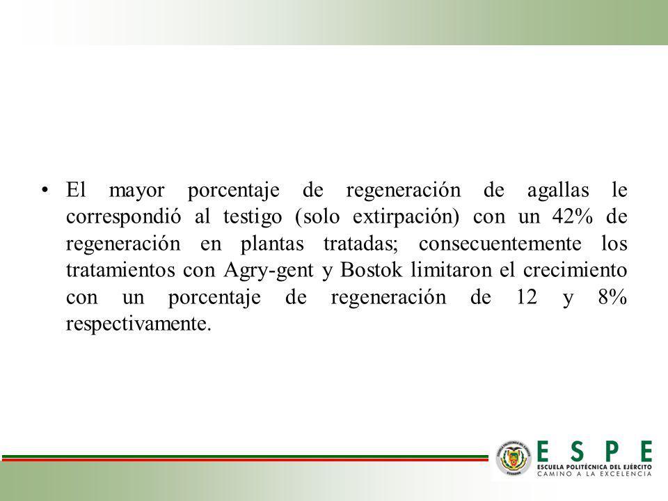 El mayor porcentaje de regeneración de agallas le correspondió al testigo (solo extirpación) con un 42% de regeneración en plantas tratadas; consecuentemente los tratamientos con Agry-gent y Bostok limitaron el crecimiento con un porcentaje de regeneración de 12 y 8% respectivamente.