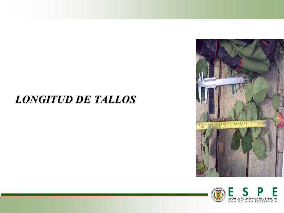 LONGITUD DE TALLOS