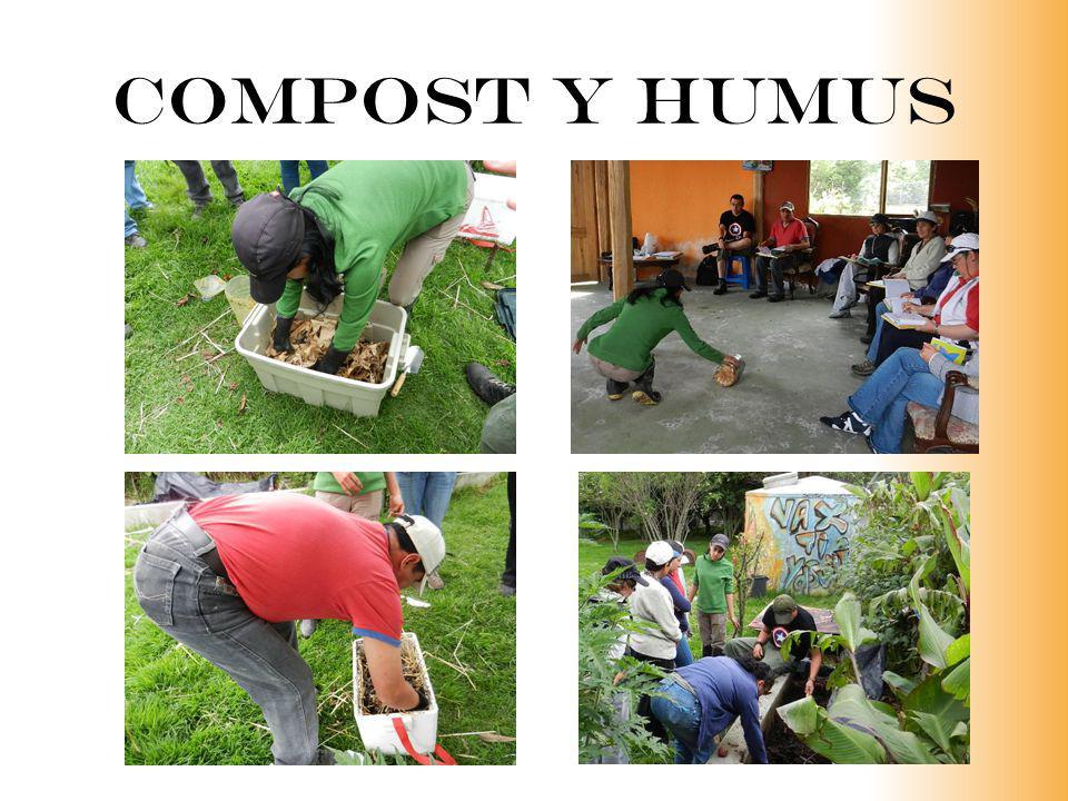 Compost y humus