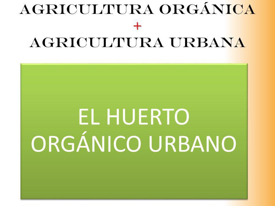 + Agricultura orgánica + agricultura urbana EL HUERTO ORGÁNICO URBANO